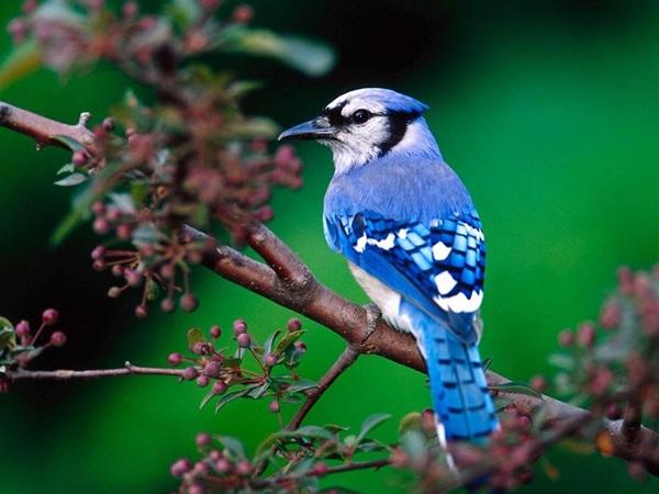 birds-on-tree- (19)