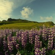 Beautiful Landscape Of Iceland (23 Photos)