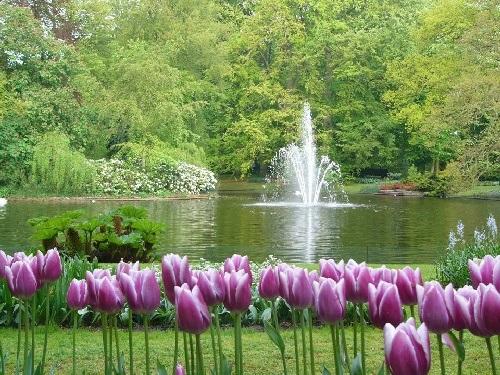 colorful-tulip- (2)