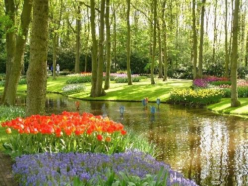 colorful-tulip- (22)
