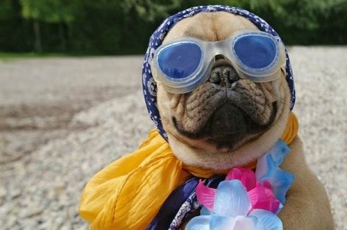 Funny Dogs (30 Photos)