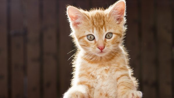 Cute Kitten Wallpaper (15 Photos)