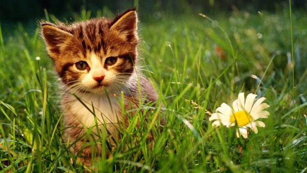 kitten-wallpaper- (15)