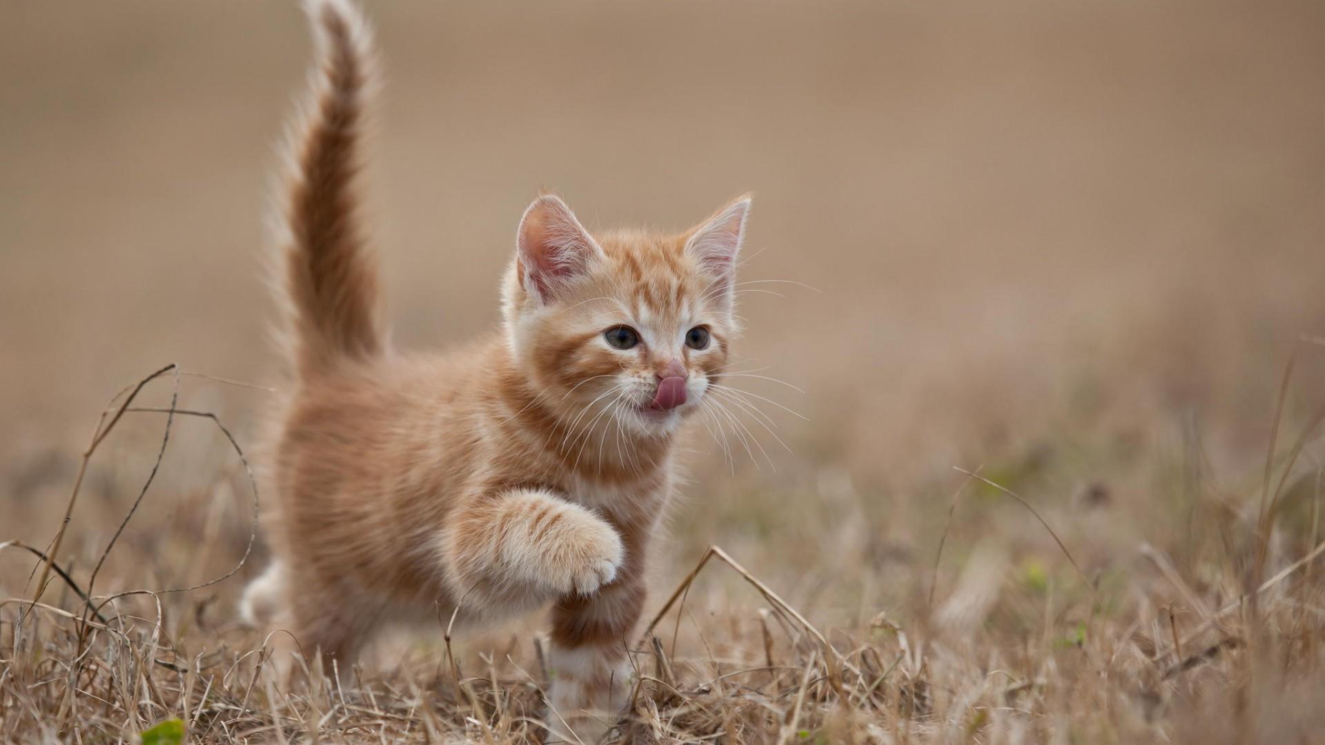 cute kitten wallpaper 15 photos