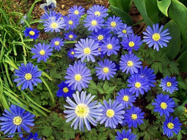Most Beautiful Flowers (40 Photos)