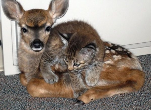 unusual-animal-friendship- (10)