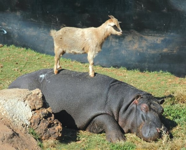 unusual-animal-friendship- (4)