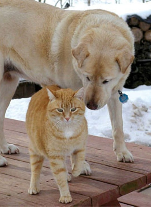 unusual-animal-friendship- (8)
