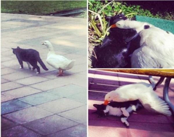 unusual-animal-friendship- (9)