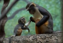 pictures-of-cute-baby-animals-with-mom- (5)