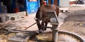 smart-cows-video-