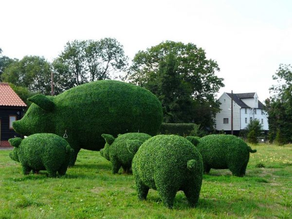 topiary-art- (11)