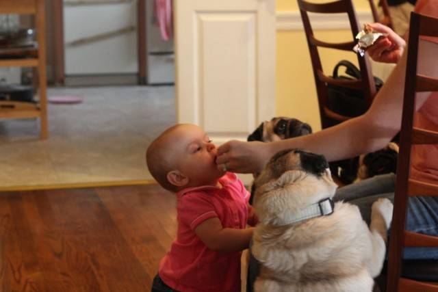 baby-with-dog- (17)