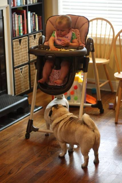 baby-with-dog- (23)