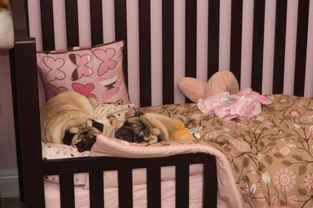 baby-with-dog- (27)