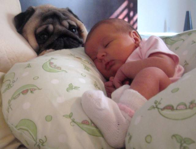 baby-with-dog- (28)