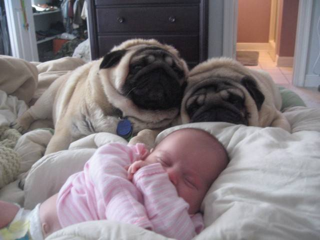 baby-with-dog- (30)