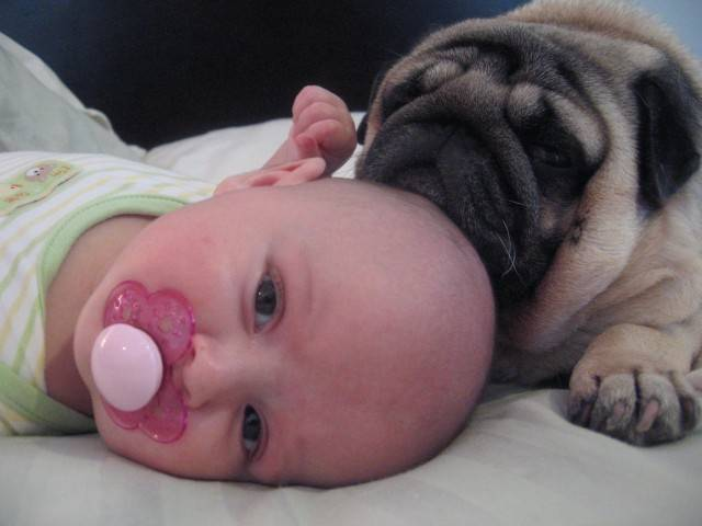 baby-with-dog- (32)