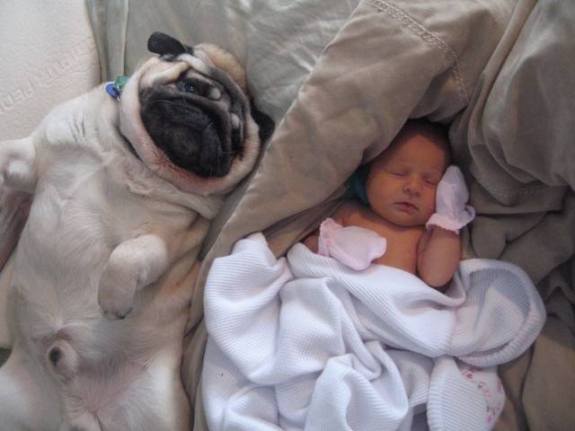 baby-with-dog- (39)