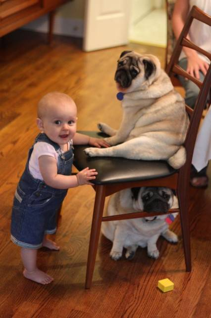 baby-with-dog- (8)